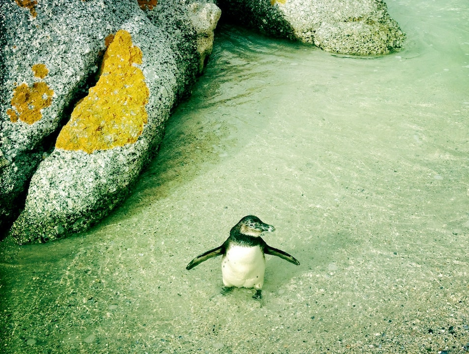 Chill with penguins (tuxedo not required)