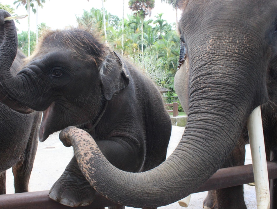 Interact With Elephants in Bali Tegallalang  Indonesia