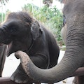 Elephant Safari Park Lodge Tegallalang  Indonesia