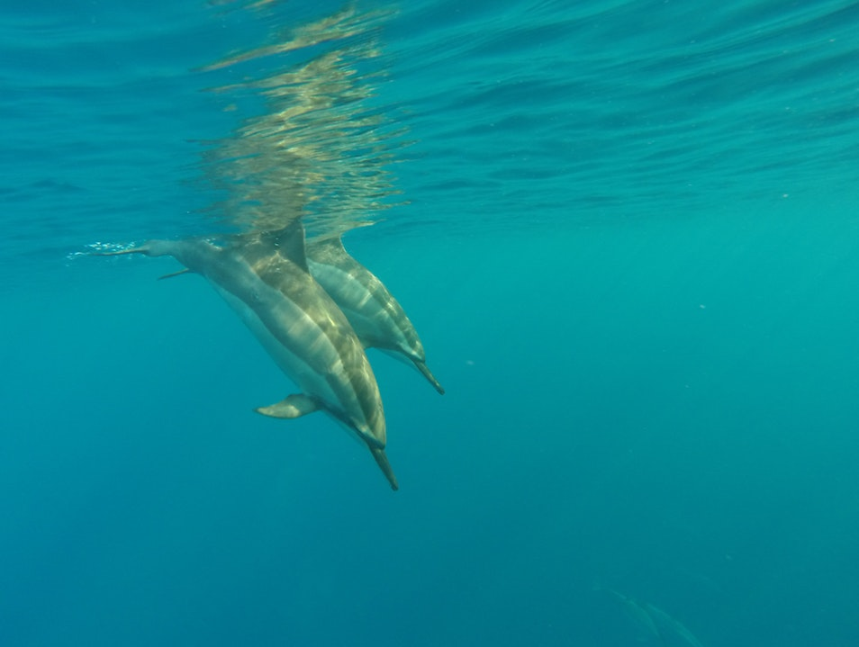 Playing with Wild Dolphins Captain Cook Hawaii United States