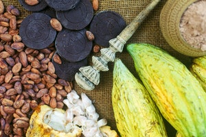 Chiapas Chocolate Tour
