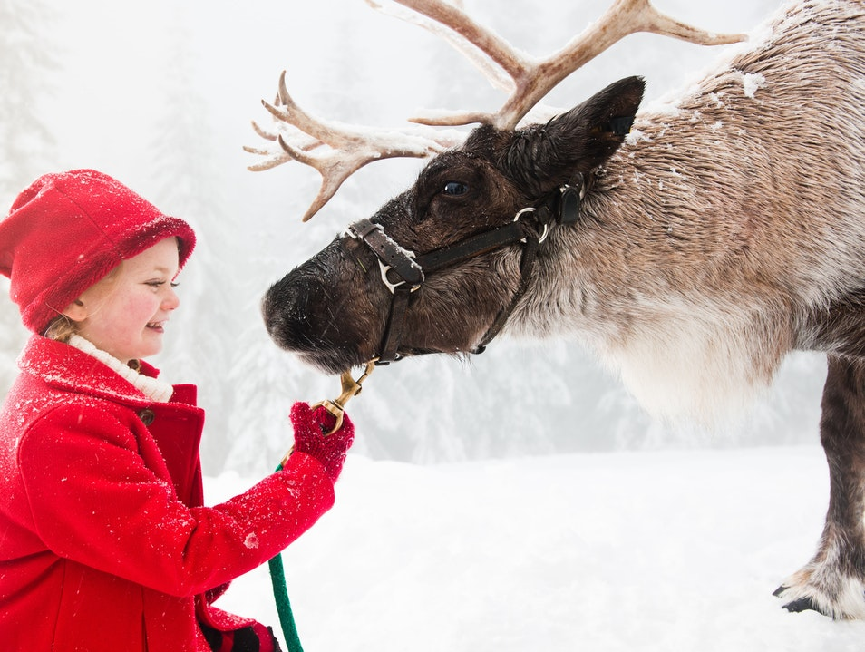 Meet Santa's Reindeers on Grouse Mountain