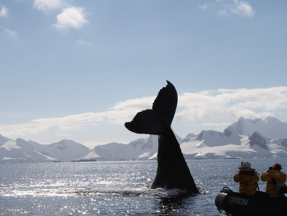 Cruise the Wild Side on Quark Expeditions