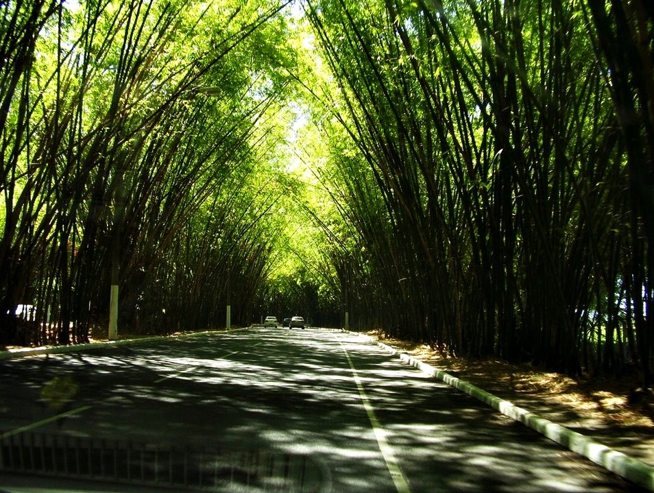 Airport Road: hello and goodbye,embraced by nature