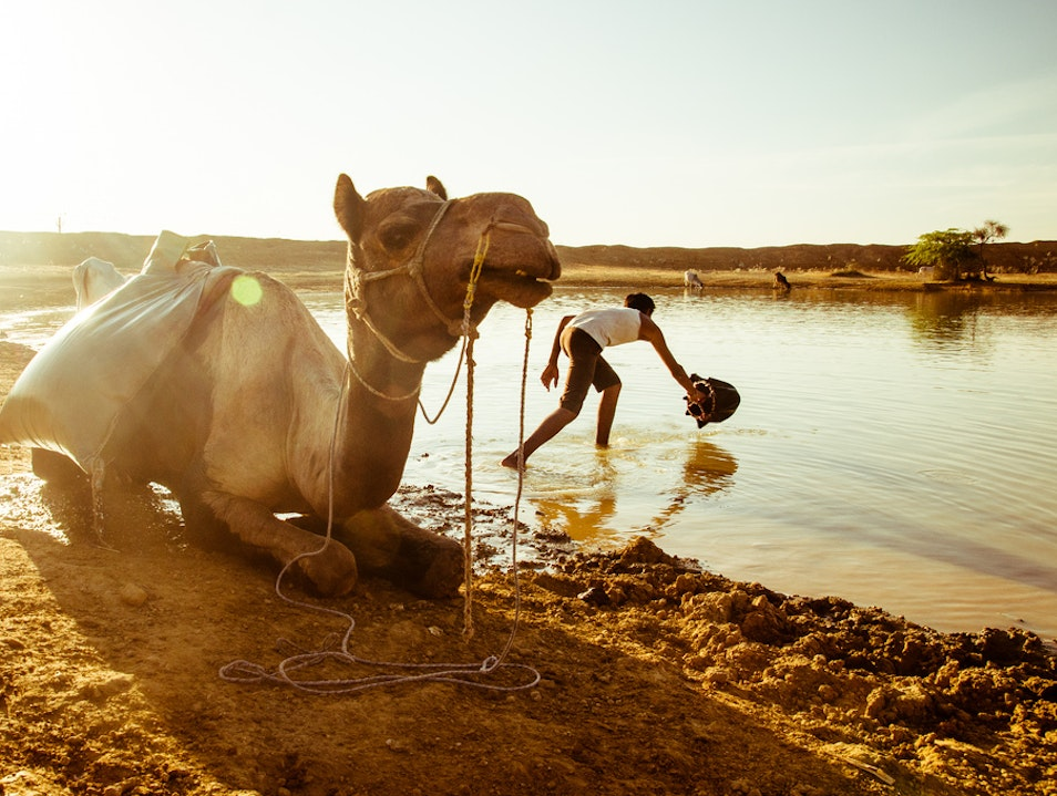 Watering Hole, Thar Desert, Rajasthan State, India.
