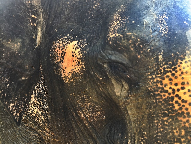 Ethical Elephant Experience in Southern Thailand