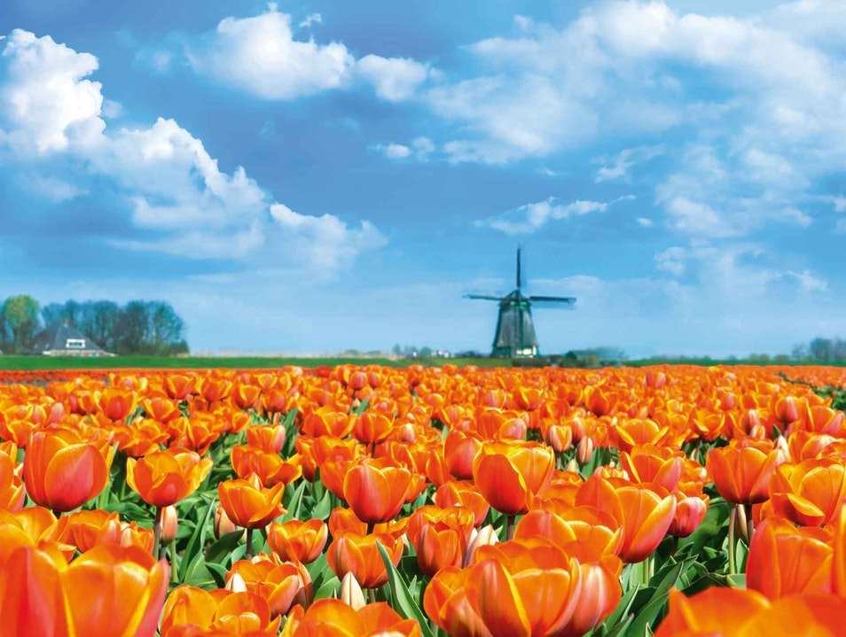 Beautiful Dutch landscape Lisse  The Netherlands