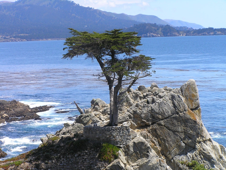 Cypress tree and Pacific Carmel California United States