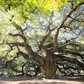 Angel Oak Park Johns Island South Carolina United States
