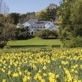 Original otahuna 20lodge house daffodils high.jpg?1489786770?ixlib=rails 0.3