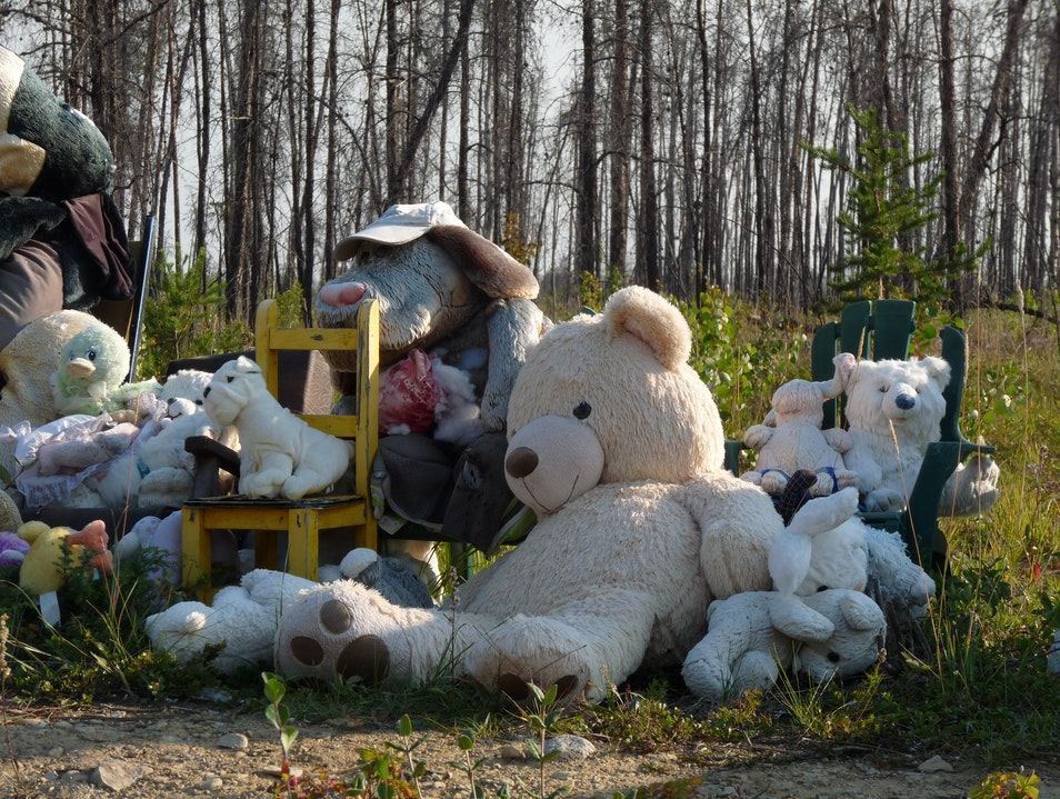 Teddy Bears in the Wilds of Canada's NWT Wood Buffalo National Park of Canada  Canada