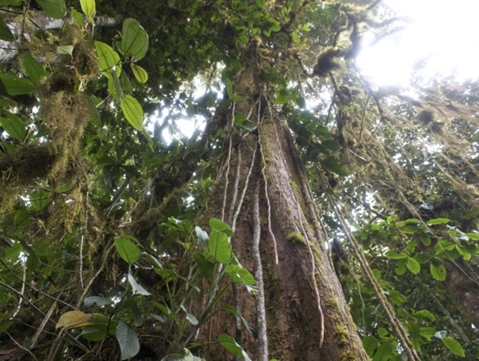 Tree of Life Delicia  Ecuador