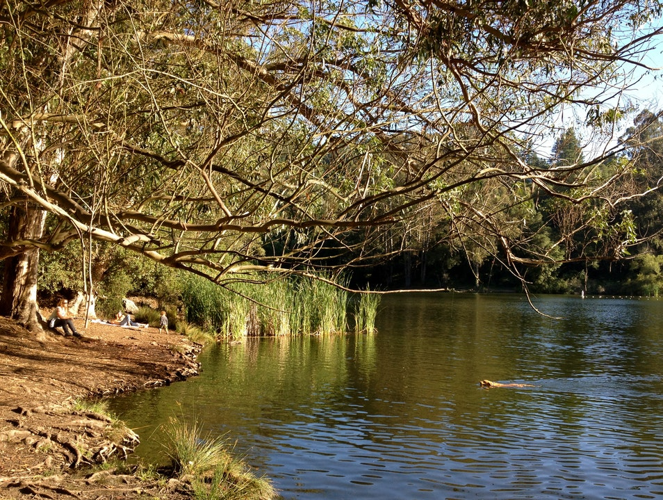 Dog and Swimming Hole Heaven Berkeley California United States