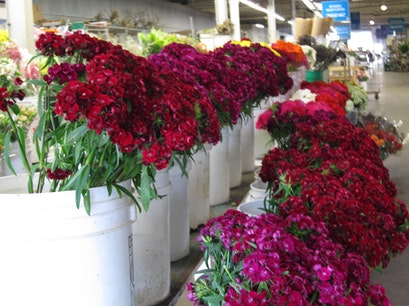 Holland Flower Market Carlsbad California United States