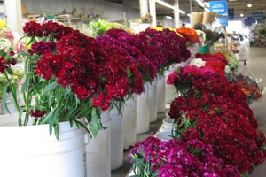 Holland Flower Market