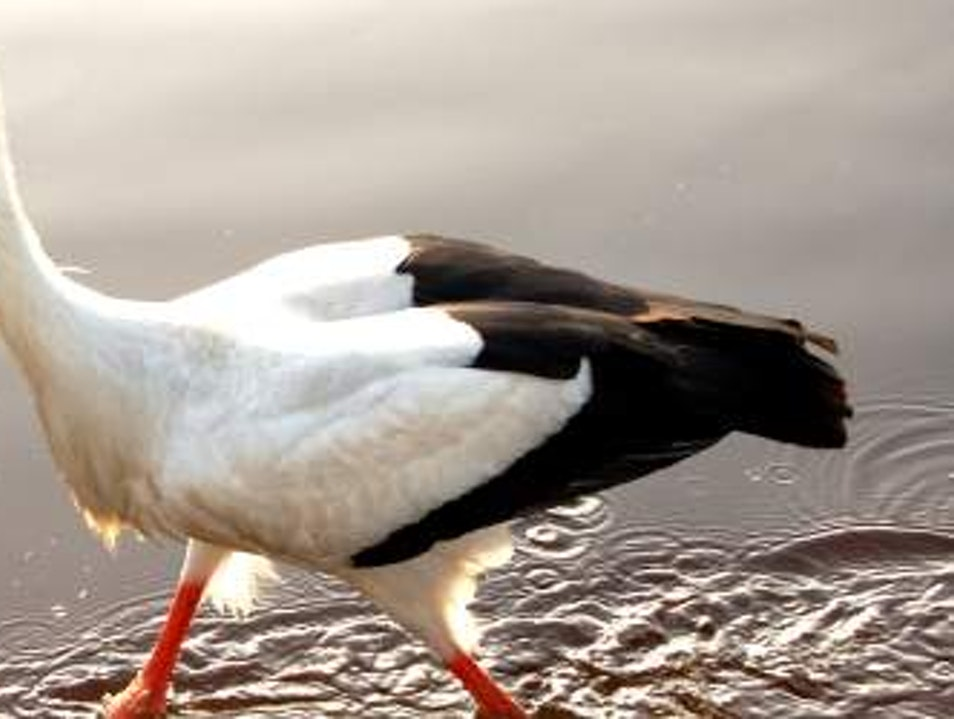 Rust, a Home for nesting Storks