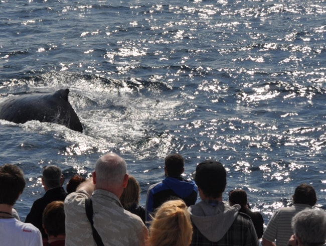 Go whale watching on a day trip from Brisbane