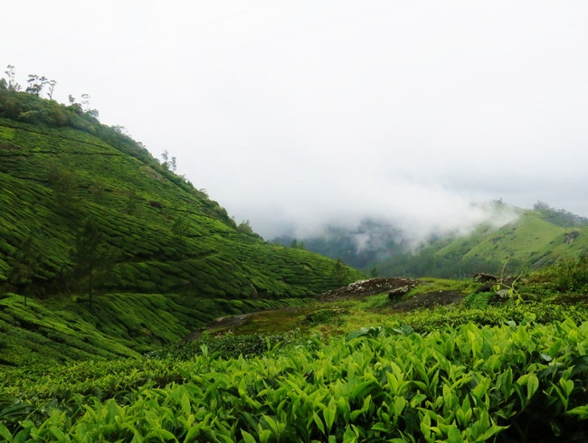 A Trek in the Tea Plantations