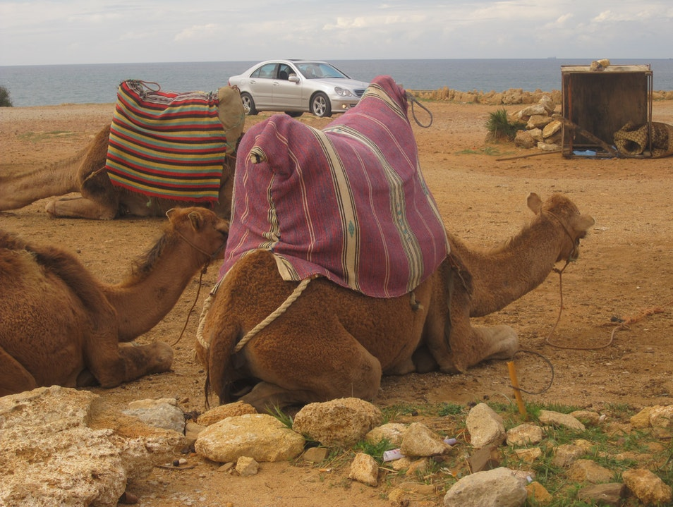 Camel Rides on the Beach in Tangier Cap Spartel  Morocco