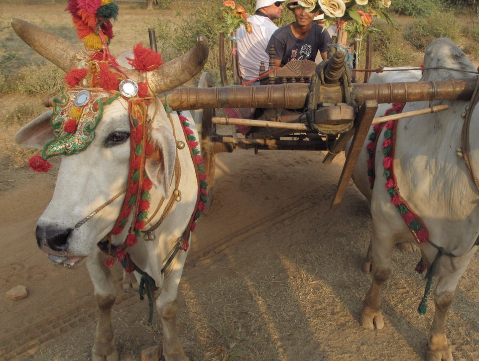 Typical oxcart.