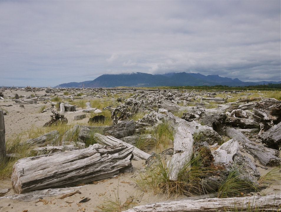 Driftwood forest Rockaway Beach Oregon United States