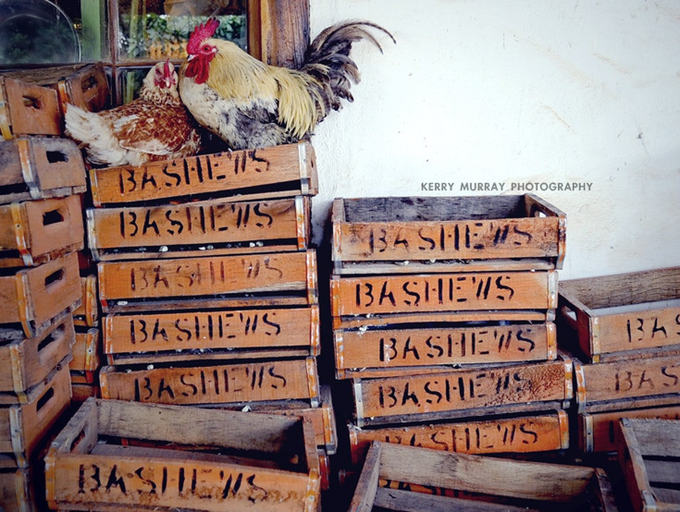 Freshly baked bread and delicious local food at Dassiesfontein