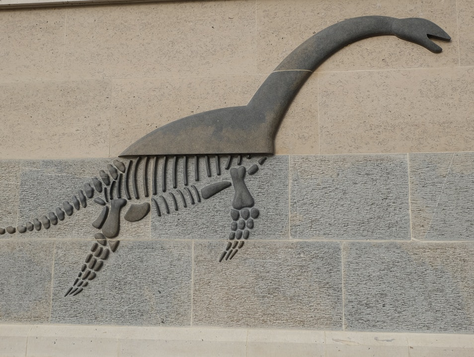Discover Fossils at the Etches Collection