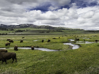 Lamar Valley Yellowstone National Park Wyoming United States
