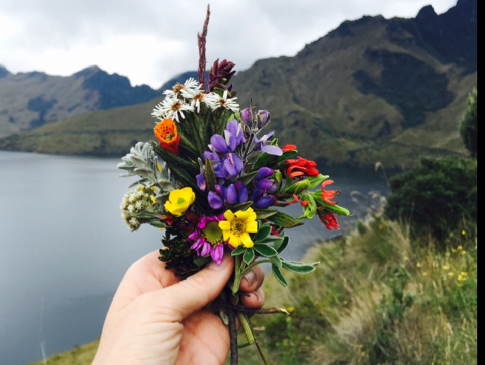 Wildflower Bouquet at Lagunas de Mojannda Malchinguí  Ecuador