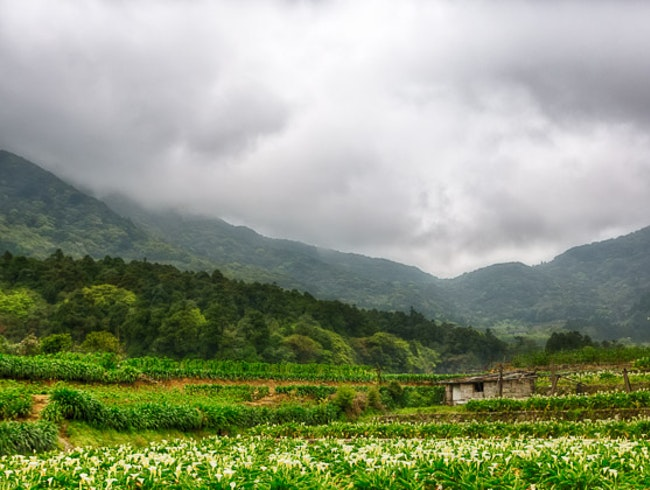 Escape to Yangmingshan