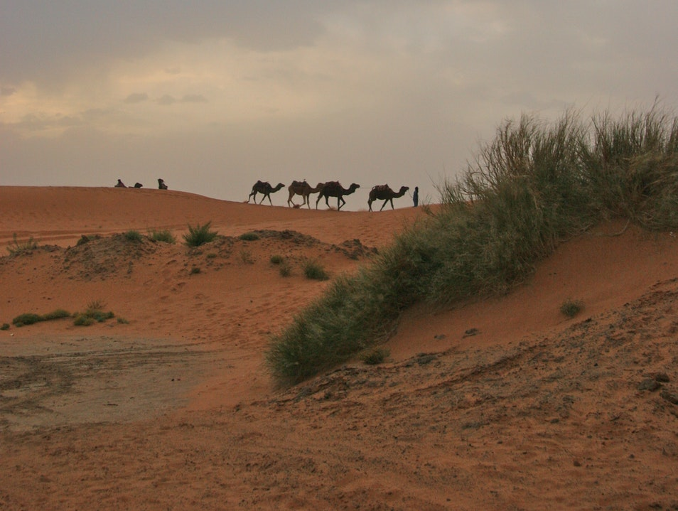 Caravan in the Sahara. Erfoud  Morocco