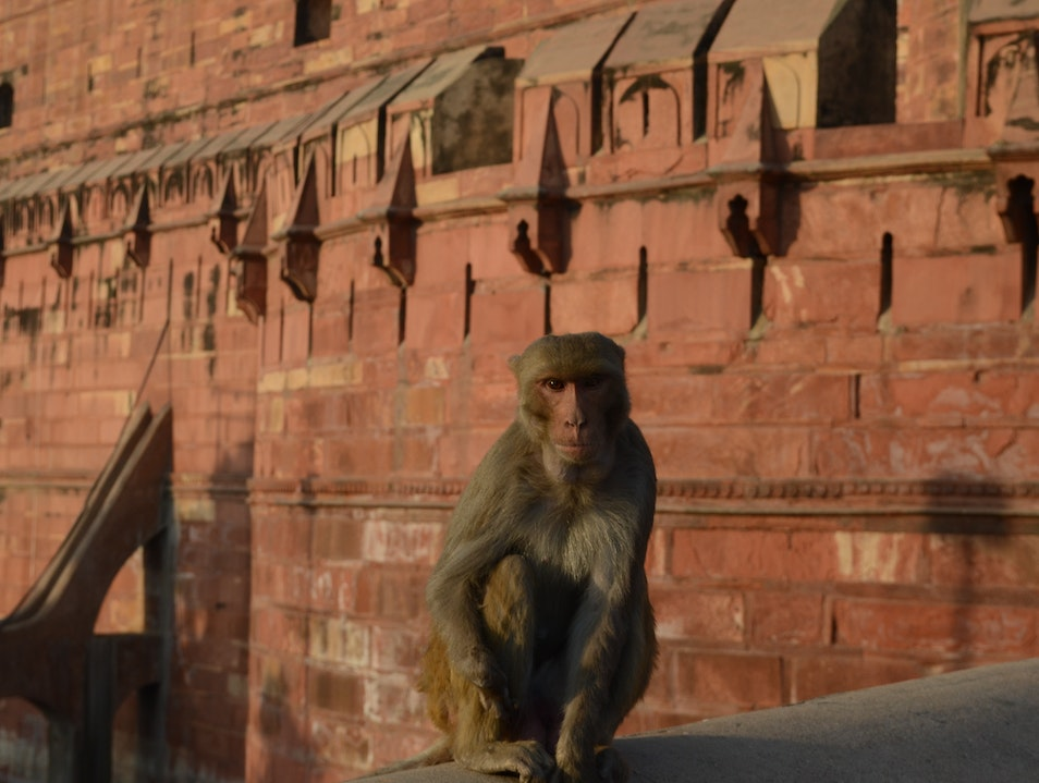 welcome party at the Red Fort Agra  India