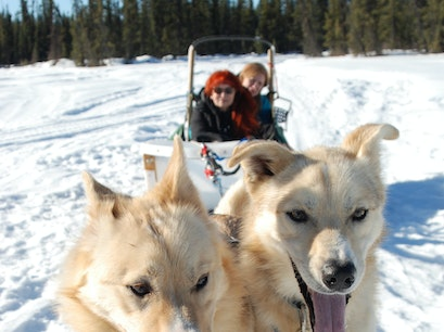 Paws for Adventure Fairbanks Alaska United States