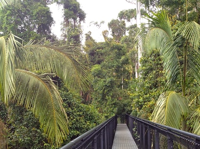 Tamborine Rainforest Skywalk Mt Tamborine  Australia