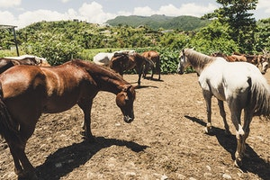 Horseback Riding in Luquillo