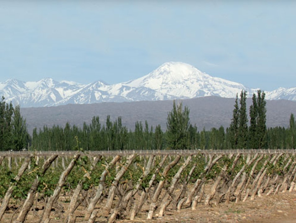 The Best Boutique Wineries in Mendoza Luján de Cuyo  Argentina