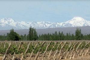 Best of the Harvest in Mendoza