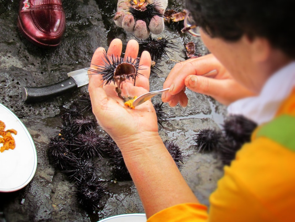 the freshest sea urchin you'll ever have...