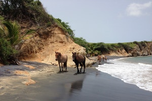 Horseback Riding in Vieques