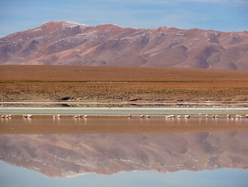 Flamingos wade in lakes of the Bolivian altiplano