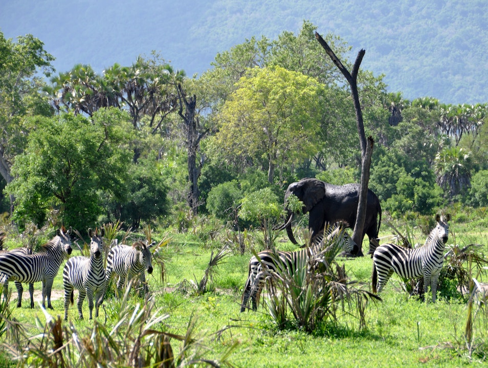 Safari on your own two feet in the Selous wilderness