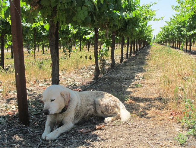 A Family-Run Winery with Great Wines