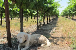 California Wines-off the beaten path!