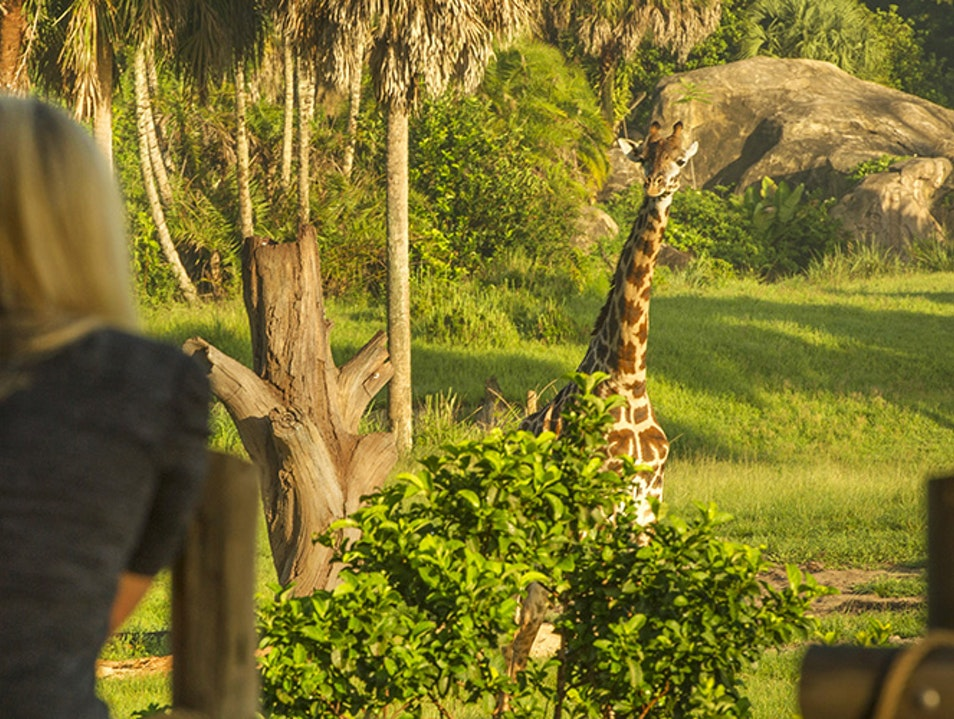 Disney's Animal Kingdom Theme Park  Orlando Florida United States
