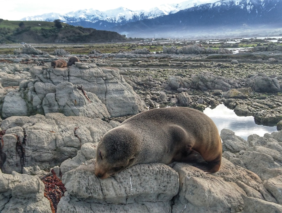 Seals, Shorelines and Snow-Capped Peaks Kaikoura  New Zealand