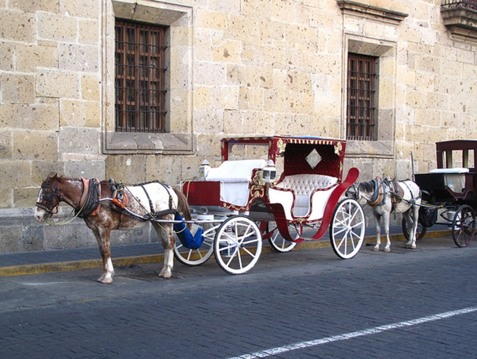 See Guadalajara from a Horse-drawn Carriage  Guadalajara  Mexico