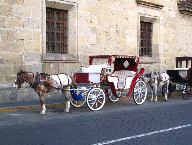 See Guadalajara from a Horse-drawn Carriage
