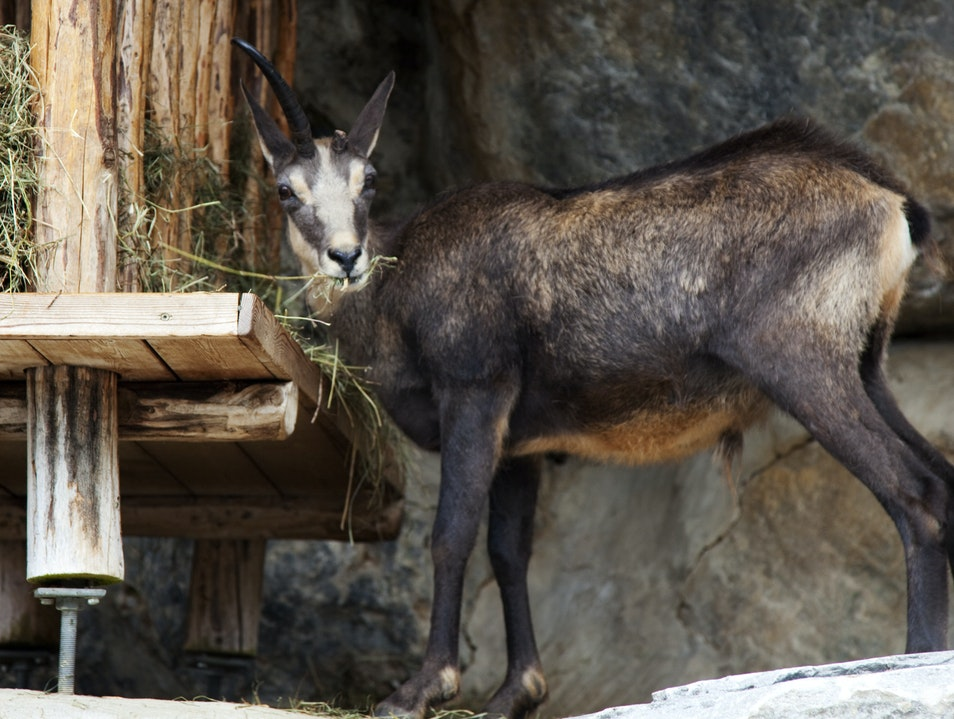 Encounters at the Alpine Zoo