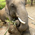 Elephant Nature Park Wang Chan  Thailand