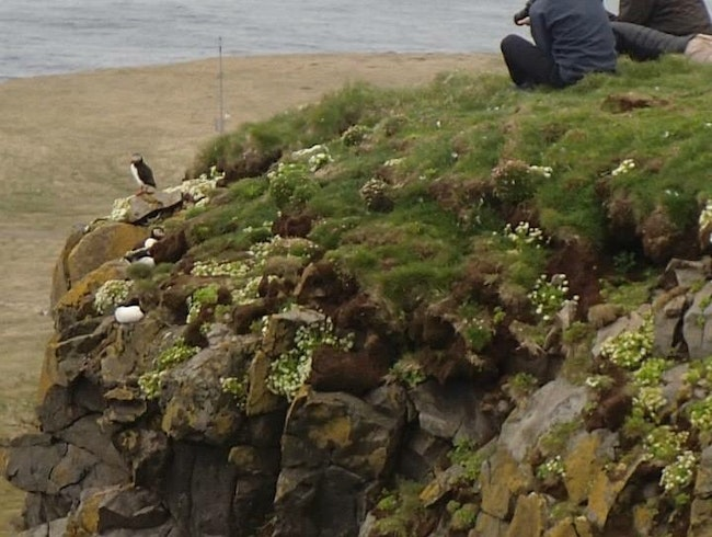 Best place to see puffins up close